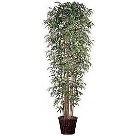 8ft Japanese Bamboo with Natural Stems